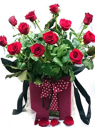 enchanting-roses