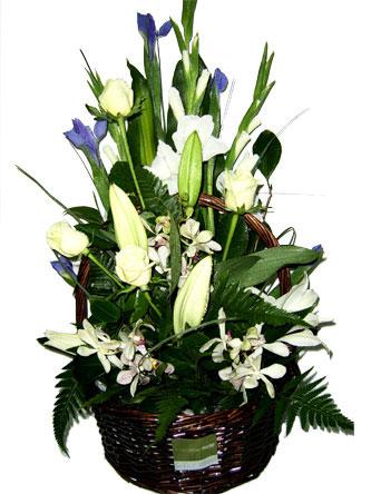 Iris, lilies, Orchids