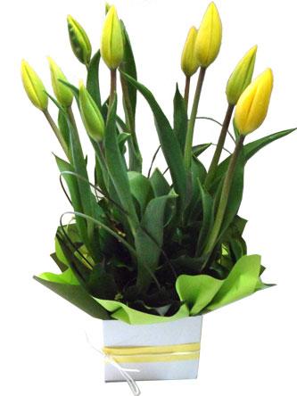 Tempting Tulips Box